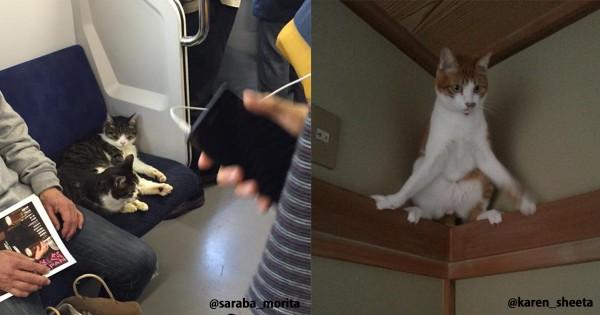 ネコ、どうしてそこにいるんだ19選