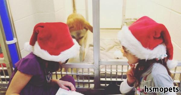 子供たちが保護施設の犬に本の読み聞かせ!優しさで溢れた取り組みに胸が熱くなる