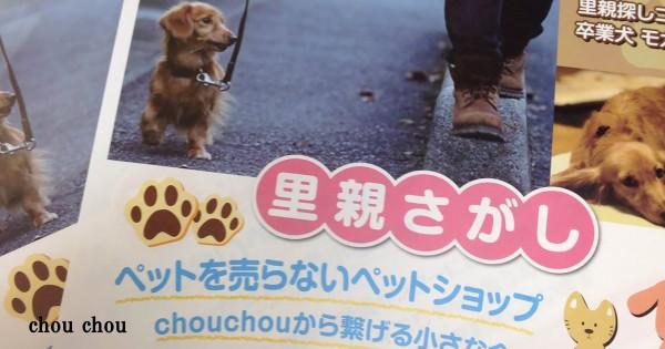 ペットを売ることを辞めたペットショップ。殺処分待ちの犬の「里親探し」を始める
