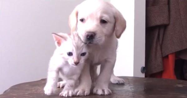 まさに天使!仲良しな子犬と子猫の仲睦まじい姿に癒される