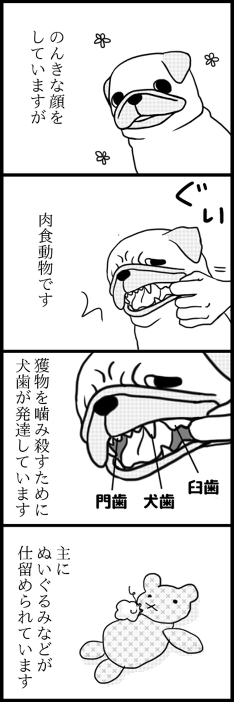 パグは肉食_R