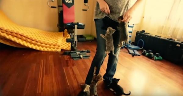 【私も登られたい】人に登りたくて仕方ないたくさんの子ネコ達が可愛すぎる