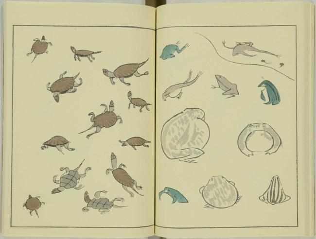 ゆるかわ 鳥獣戯画21
