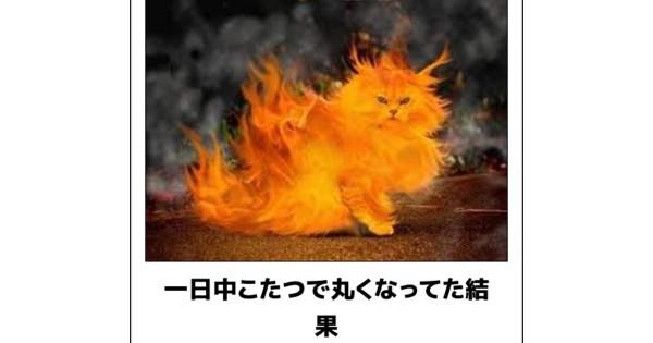 猫ボケて (1)