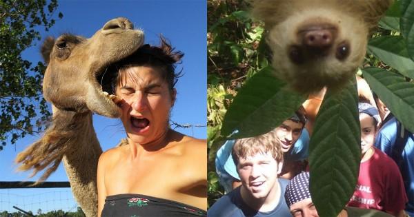 「自撮りしてるところ失礼♪」偶然を装ってワザと写りにきた動物たち12選