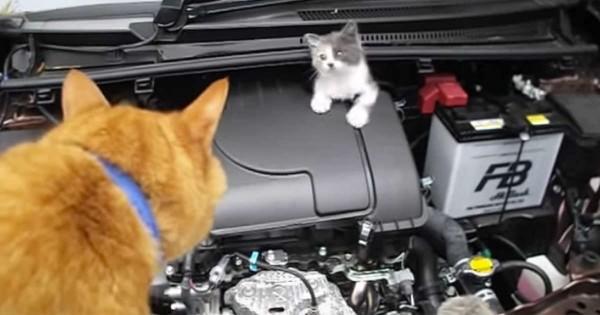 【ありがとう!】エンジンに迷い込んだ子猫。茶トラの力を借りて保護に成功!