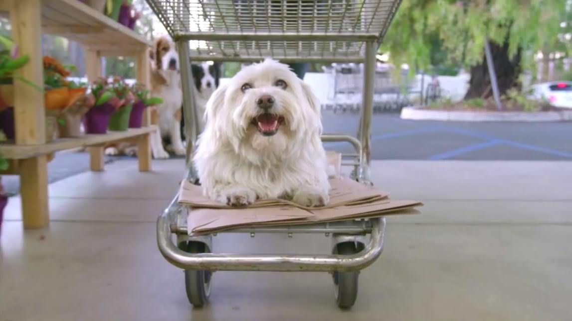 犬 お菓子3