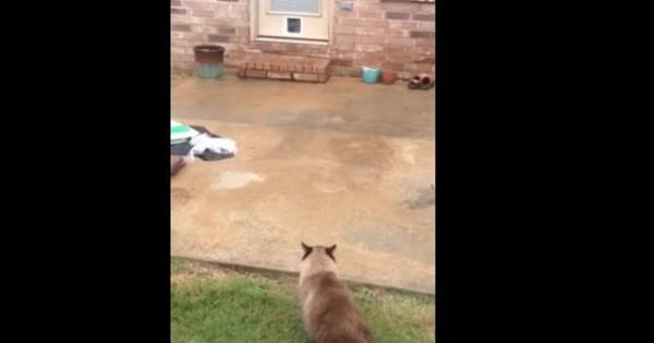 大切な猫が出入りしやすいようにドアに猫用の通路をつけた結果