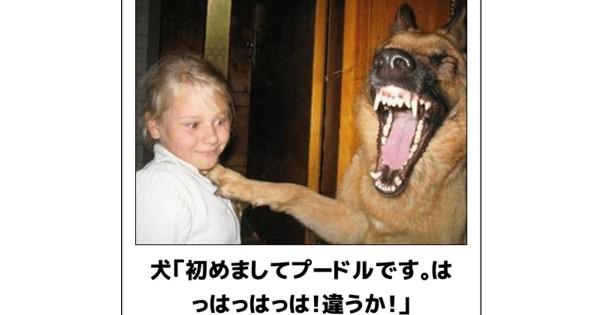 犬 ボケて