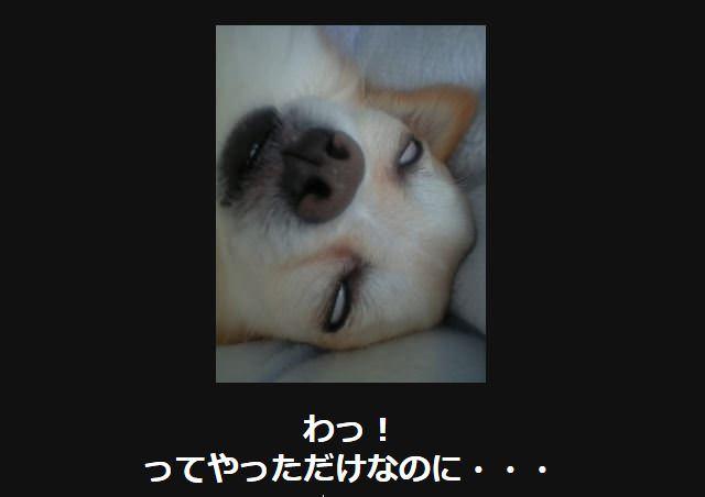 大喜利 犬6