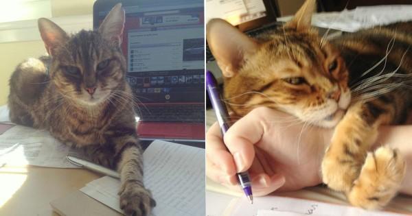 【かわいいから構うけど】猫がいると勉強が全くはかどらない15選
