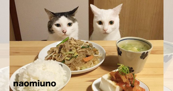 海外でも大人気!夕飯になると机に集合する日本のニャンコにベタ惚れ