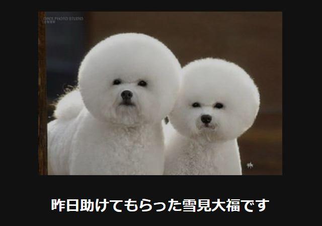 大喜利 犬29
