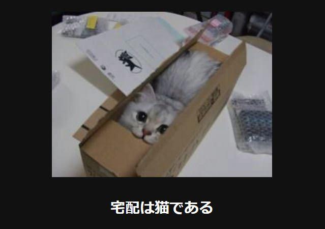 大喜利 猫29