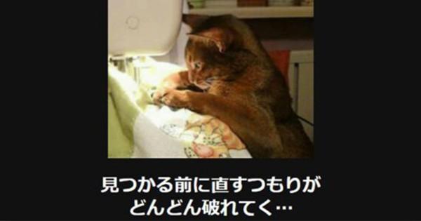 【腹筋ねじ切れた】笑って癒される猫の大喜利14選