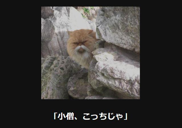 大喜利 猫42