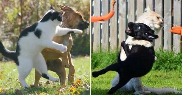 猫の尻に敷かれる犬13選