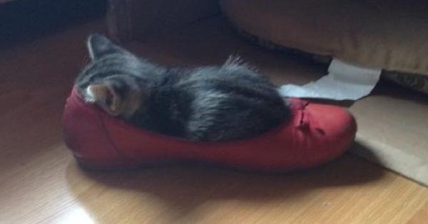 猫が最も落ち着くのは「ご主人の靴の中」である13選
