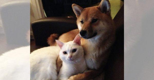 「キミたち絶対付き合ってるよね」って感じの犬猫たち10選