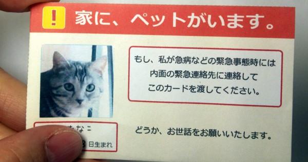 動物だって大切な家族!「家にペットがいますカード」を用意して緊急時の対策を