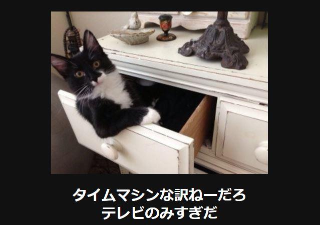 大喜利 猫32