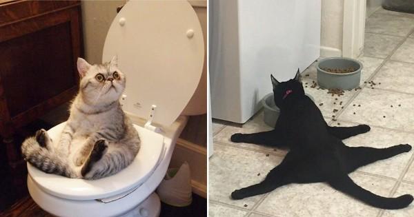 【油断禁物】見られていると知らずにいつものクセが出ちゃった猫13選