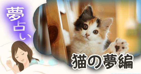 【ネコを飼う夢は秘密を意味します】猫にまつわる夢占い12パターン