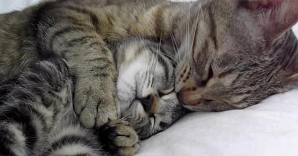 【旅立ち】子猫が里親にもらわれる日、お別れ前の母猫の行動に考えさせられる..