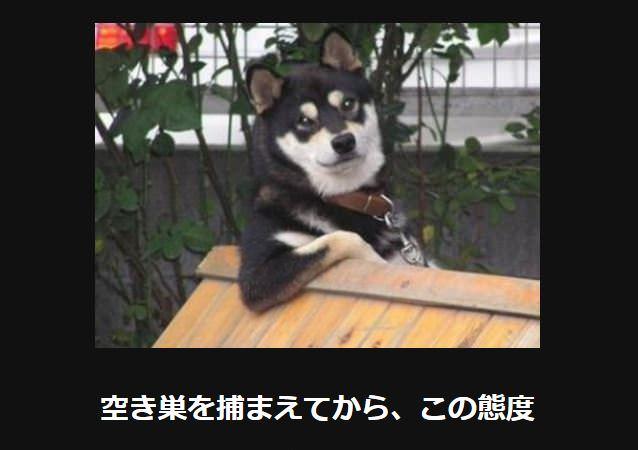 大喜利 犬30