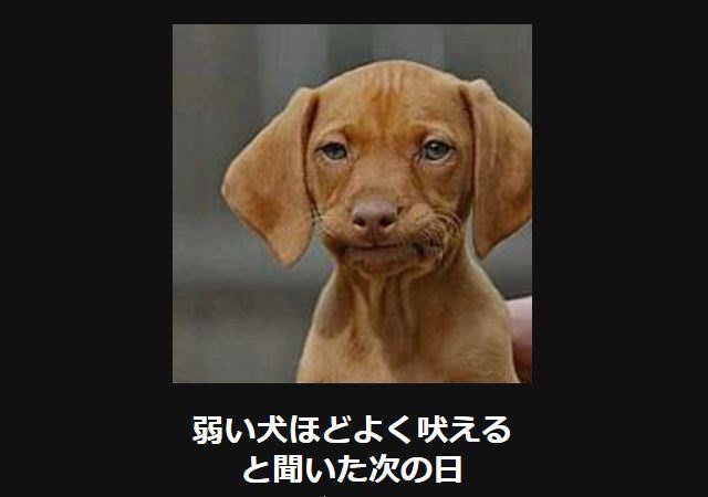 大喜利 犬15