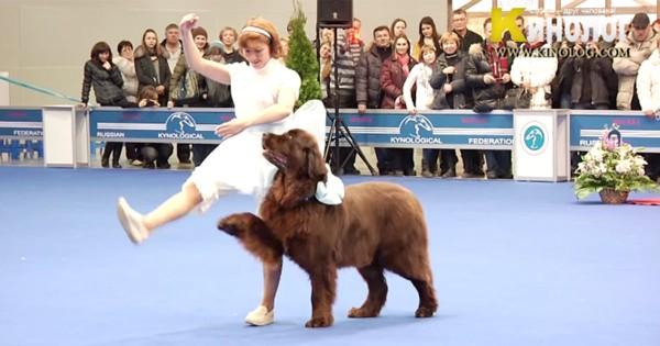 完璧すぎるっ!! 思わず見惚れてしまう、女性と犬の息ピッタリの演技がすごい!