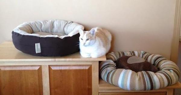 【ご主人の好意を・・・】ワザとやっているとしか思えない猫の行動12選