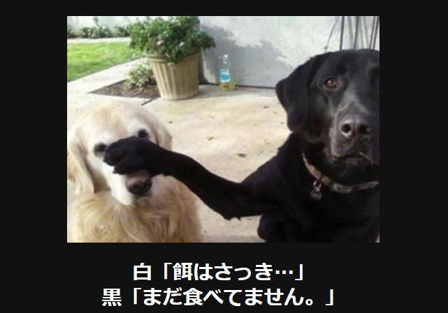 大喜利 犬12