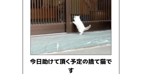 桜と共に笑いもどうぞ!あなたの腹筋を攻めてくる猫のボケて12選