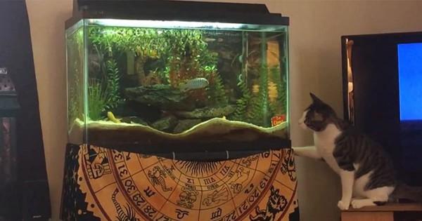 どうしても水槽の中のお魚が欲しい・・・ネコが一生懸命、一生懸命考えた方法がこちら