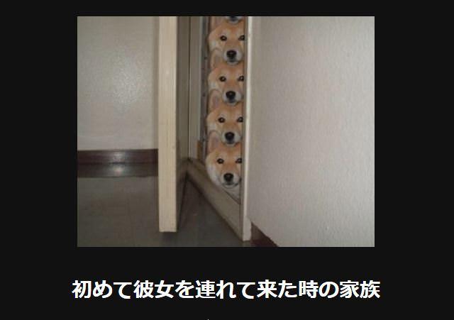大喜利 犬27