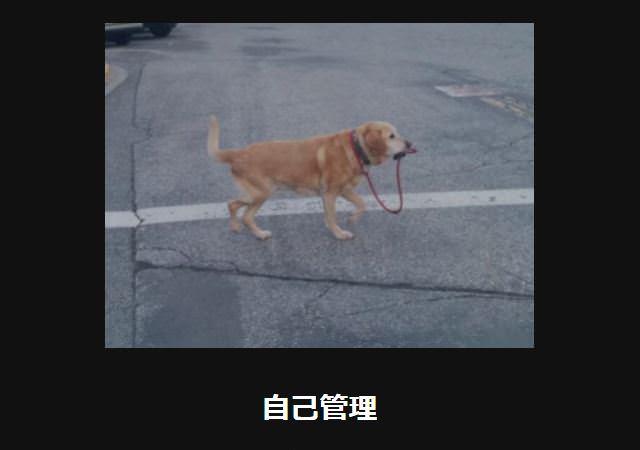 大喜利 犬46