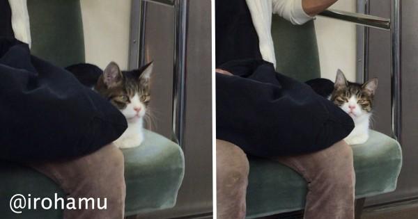 【会えたらラッキー】西武線に乗ってたあの猫は常連客だったことが判明!