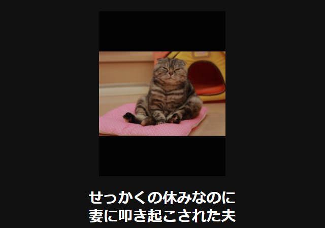 大喜利 猫9