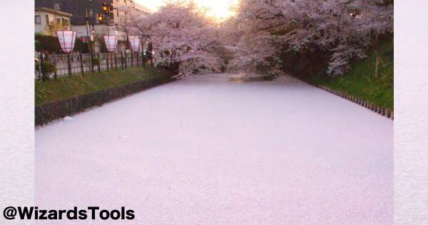 散り始めてからが見頃! 水面に浮かぶ桜の絨毯が美しすぎて絶句