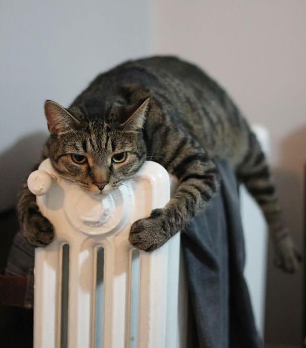 猫 暖かい4