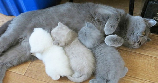 【人間よりキツそう】猫さんの子育てが尋常じゃなく大変そうな件11選