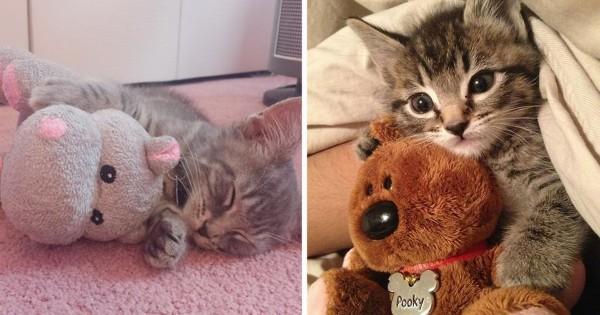【可愛い+可愛い=超可愛い】子猫とぬいぐるみは最強のコンビだった10選