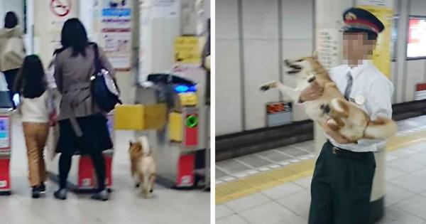 お前どっから来た?!(笑) 柴犬が電車への無賃乗車を試みるも結末が笑える