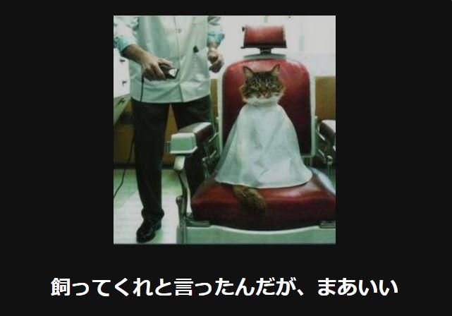 大喜利 猫12