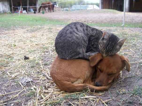 猫 暖かい2