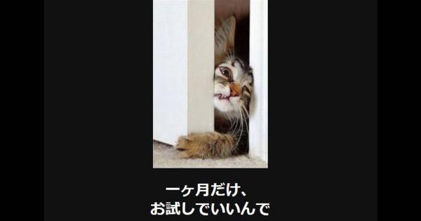 春一番の笑いをお届け!可愛くも面白い猫の大喜利13選