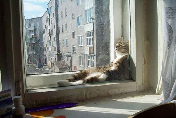猫 暖かい5