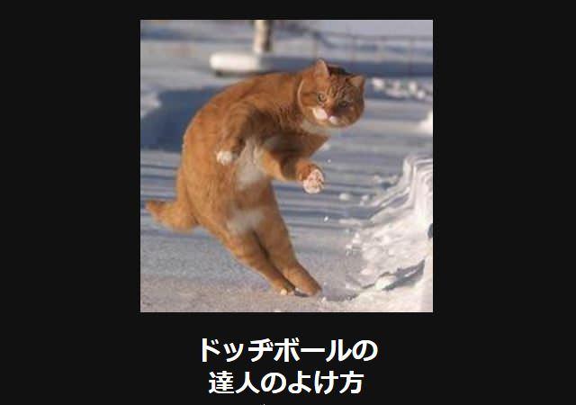 大喜利 猫6