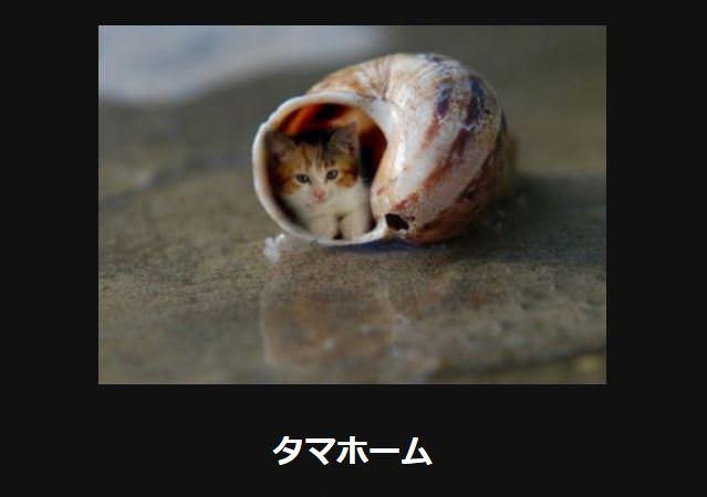 大喜利 猫3